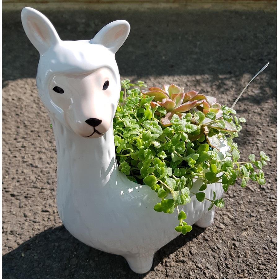 Llama Planter