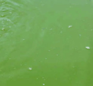 Murky / Green Water